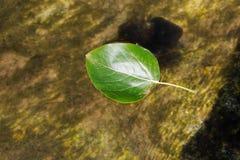 流动与河的绿色叶子 免版税图库摄影
