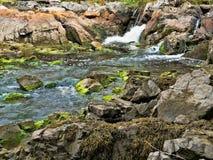 流动入盐水的淡水小河 免版税库存图片