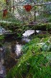 流动在一棵下落的树下的小小河 免版税库存图片