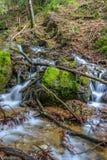 流动在分支和岩石之间的瀑布 库存照片