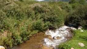 流动在夏天草甸过去绿草、花和灌木的河春天 影视素材