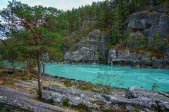 流动在岩石附近的河 免版税库存照片
