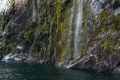 流动在峭壁下的边的瀑布与生长在岩石墙壁上的植物和青苔的在Milford Sound,新西兰 免版税库存照片