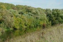 流动在柳树之间的河 库存图片