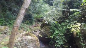流动在森林的小河 免版税库存照片