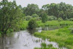 流动在森林的狭窄的河 免版税库存图片
