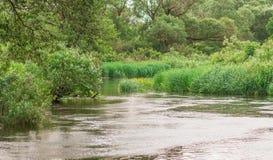流动在森林的狭窄的河 库存图片