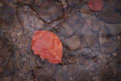 流动在水中的下落的叶子 库存照片