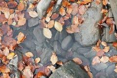 流动在水中的下落的叶子 库存图片
