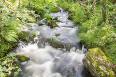 流动在河的柔滑的水在一个狂放的森林中间 免版税库存照片