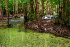 流动在泰国的密林的一条干净的河 库存图片
