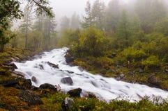 流动在生苔岩石和绿色树之间的快速和冷的山河在阿尔泰共和国 免版税图库摄影