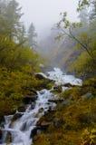 流动在生苔岩石和绿色树之间的快速和冷的山河在阿尔泰共和国 图库摄影