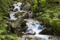 流动在生苔石头中的快速的山河 免版税库存照片