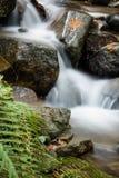 流动在秋天有绿色蕨的风景森林的美丽的柔滑的软的河 免版税库存图片