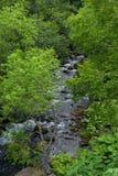 流动在绿色屋顶下的河在知床国立公园离开 库存图片