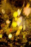 流动在水的秋天叶子 免版税库存图片