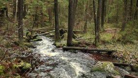 流动森林的小河下来 股票视频