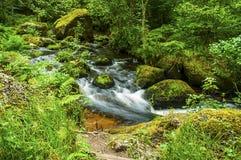 流动的小河在南威尔士 免版税库存照片