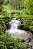 流动的小河在森林 库存图片