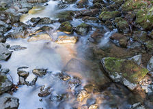 流动的小河在Muir森林 库存图片