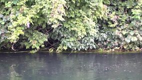 流动的水在冷的河通过绿色树干和分支 股票视频