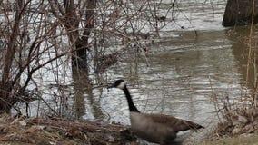 流动的河和移动的草本在平安的自然 股票视频