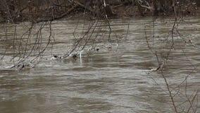 流动的河和移动的草本在平安的自然 影视素材