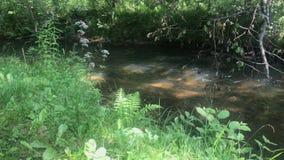 流动的河在夏令时,美好的视域的森林 影视素材