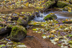 流动的水,秋天叶子 免版税库存图片