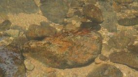 水流动被击中岩石在河下做泡影并且在森林里挥动 影视素材