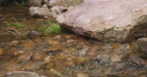 流动通过大冰砾的水在有长的草的岩石Stony Creek 股票视频