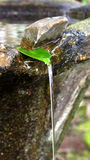 流动从叶子的水 图库摄影