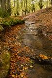流和秋天森林 免版税库存照片