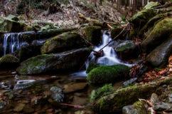 流在森林里 库存照片
