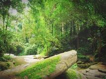 流在森林里 免版税库存图片