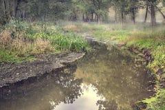 流在森林里 免版税库存照片