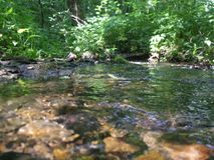 流在森林 夏令时,晴朗的午间 库存图片