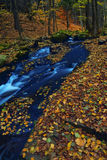 流在秋天森林里 库存图片
