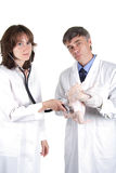 流感母鸡 免版税图库摄影