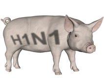 流感猪 库存图片