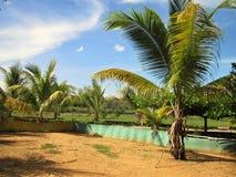 流星锤criollas的一个传统泥运动场在巴里纳斯州,委内瑞拉 免版税库存图片