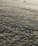 流沙规则结构在一个被风吹扫海滩的 库存照片