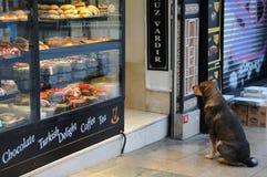 流浪狗和土耳其快乐糖巧克力房子 库存图片