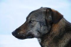流浪狗在切尔诺贝利中 免版税图库摄影