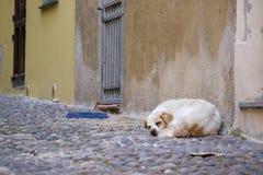 流浪狗在街道上睡觉 免版税库存图片