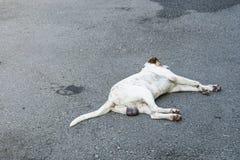 流浪狗在街道上睡觉 免版税库存照片