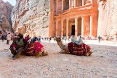 流浪的骆驼petra广场金融管理系统 免版税库存照片