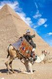 流浪者供以座位骆驼 免版税库存照片
