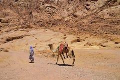 流浪者带领在多山的一头骆驼 库存图片